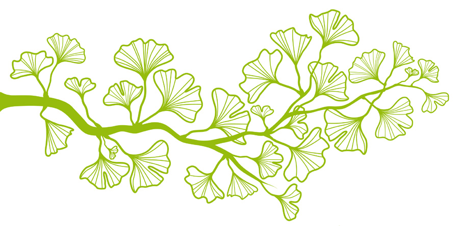 gingko-vine